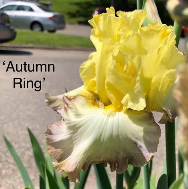 Autumn Ring Image